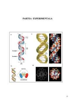 Licență - Tehnici de Biologie Moleculara in Analiza si Epidemiologia Enterovirusurilor
