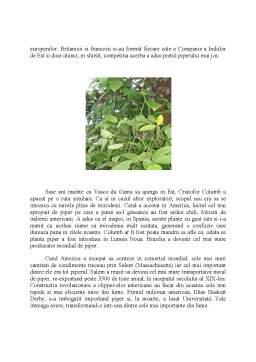 Referat - Plante Tropicale Condimentare - Piperul Negru