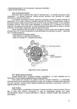 Curs - Anatomie Comparată