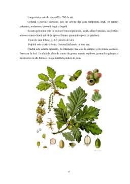 Proiect - Tehnologii de Obținere a Plantelor de Gorun