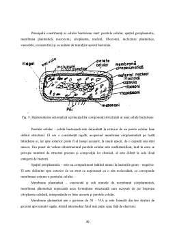 Licență - Acid Glutamic - Tehnologie de Obtinere