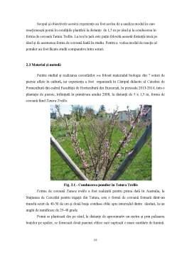 Disertație - Comportarea Unor Soiuri Noi de Piersic in Conditiile Zonei din Bucuresti