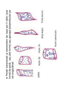 Curs - Anatomia Lemnului