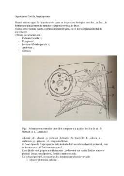 Referat - Prezentarea părților componente ale unei flori