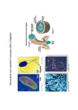 Curs - Suport de curs biologie celulara