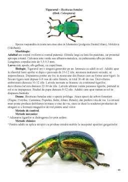 Proiect - Distributia pe culturi a principalelor insecte daunatoare si metode de combatere