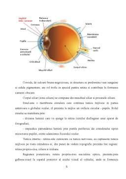 Proiect - Ochiul