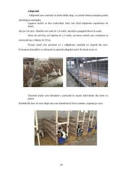 Proiect - Fermă specializată pentru producția de lapte, rasă Bălțată Românească, efectiv de 28 capete, întreținere legată