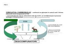 Proiect - Proiect didactic - Circuitul materiei și fluxul energiei în ecosistem