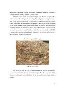 Proiect - Citocromul B - Marker Filogenetic la Cyprinidae