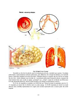 Curs - Anatomie