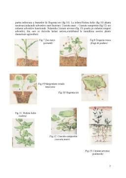 Referat - Organe Vegetative