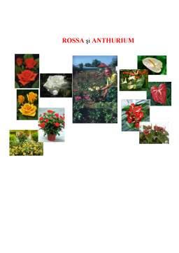 Referat - Rossa și Anthurium