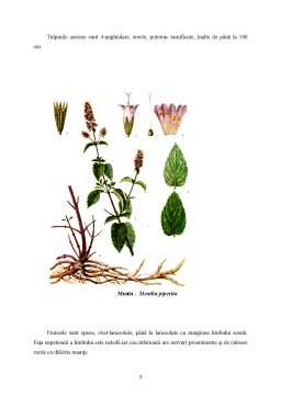 Referat - Plante Medicinale și Aromatice
