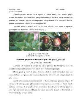 Referat - Modul de Atac si Plantele Atacate de Speciile Prezente in Plantatiile Pomicole