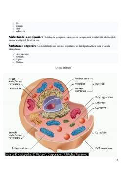 Referat - Celula