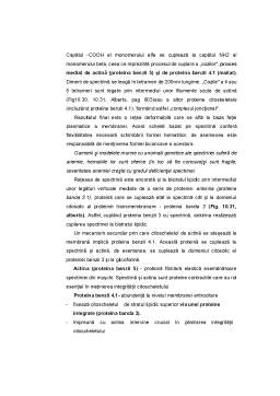 Curs - Structura Hematiei