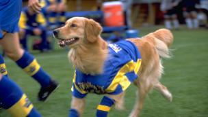 Air Bud 3: World Pup (2000)